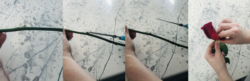 How to properly prepare a rose, step 2