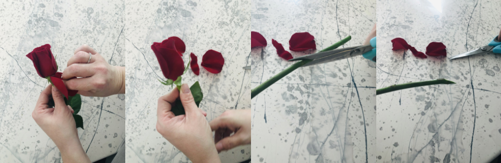 How to properly prepare a rose, step 3